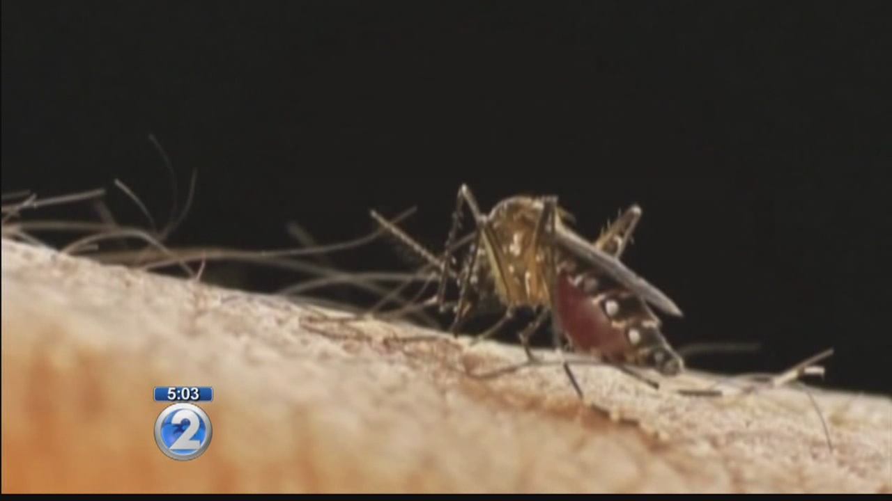 State relaunches 'Fight the Bite' campaign in light of Zika threat