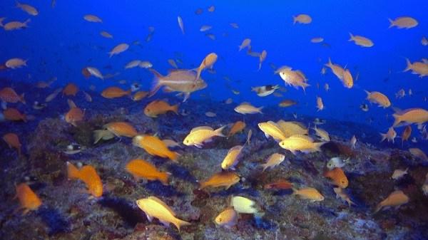fish communities kure atoll_160874