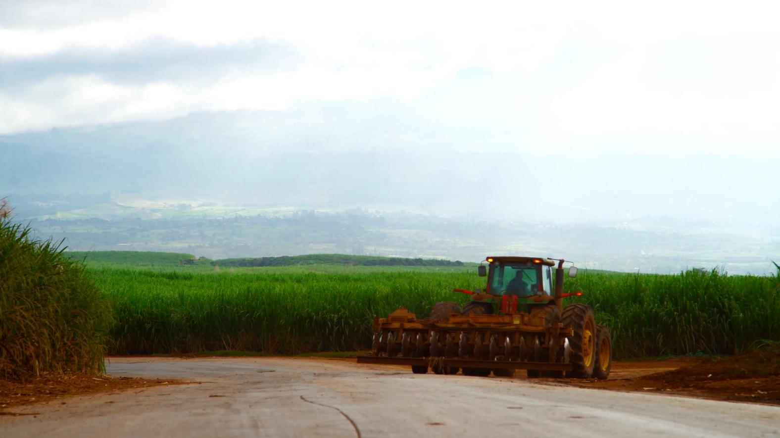 hcands alexander baldwin sugarcane field plantation 6_137061