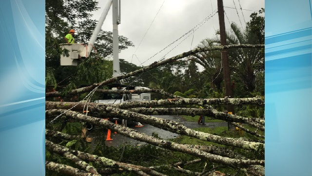 helco cuts trees after tropical storm darby_168442