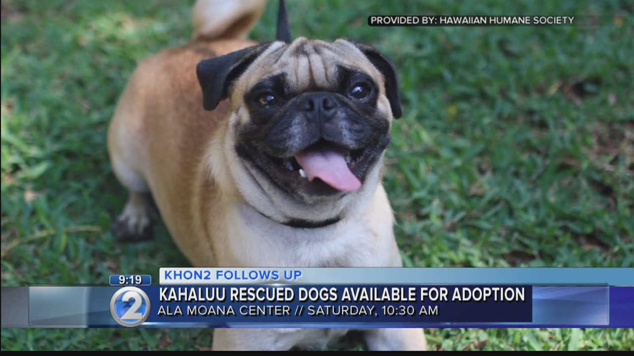 Dogs, puppies rescued in Kahaluu now available for adoption