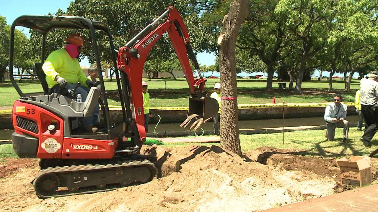 ala moana tree planting_169633