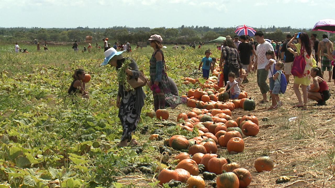 aloun-farms-pumpkin-patch-2016-1_180231