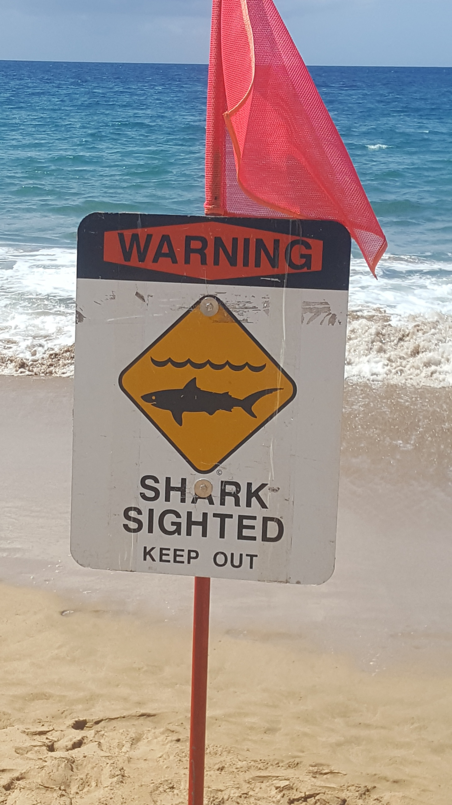 Shark Warning at Makaha Beach | KHON2