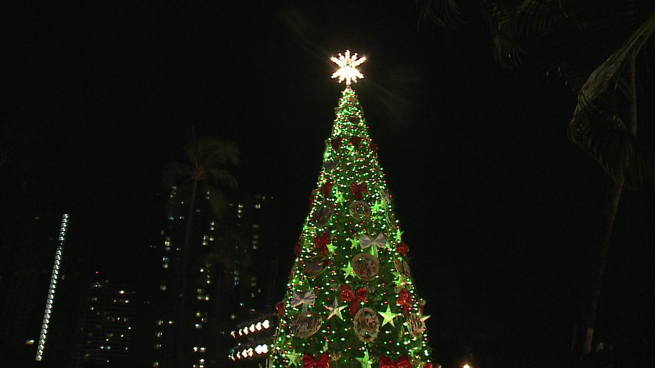 honolulu-hale-christmas-tree_187497