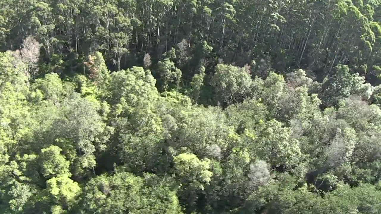rapid-ohia-death-trees_187944