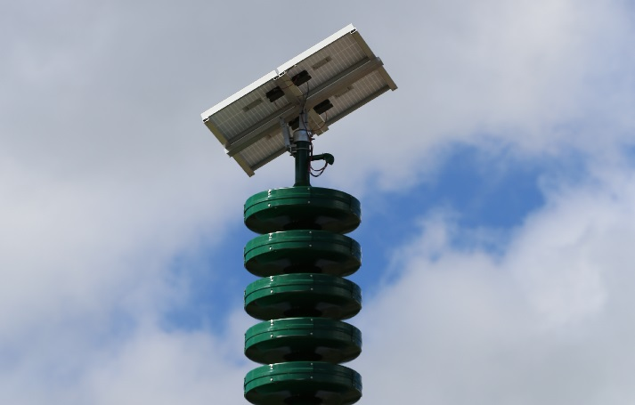 new siren photo horizontal closeup_202561