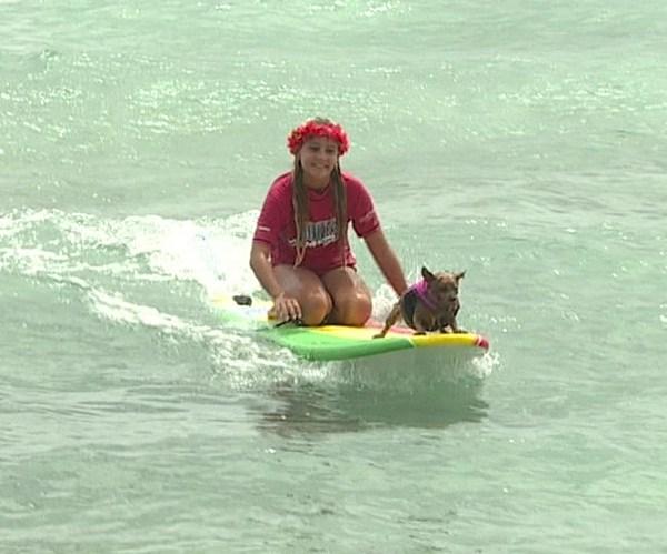 dog surfing_220696