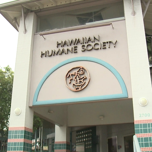 hawaiian humane society_1520393738989.jpg.jpg