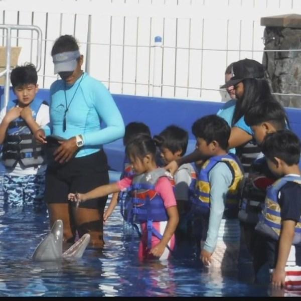 Keiki_Corner__Summer_day_camps_at_Sea_Li_0_20180419025800