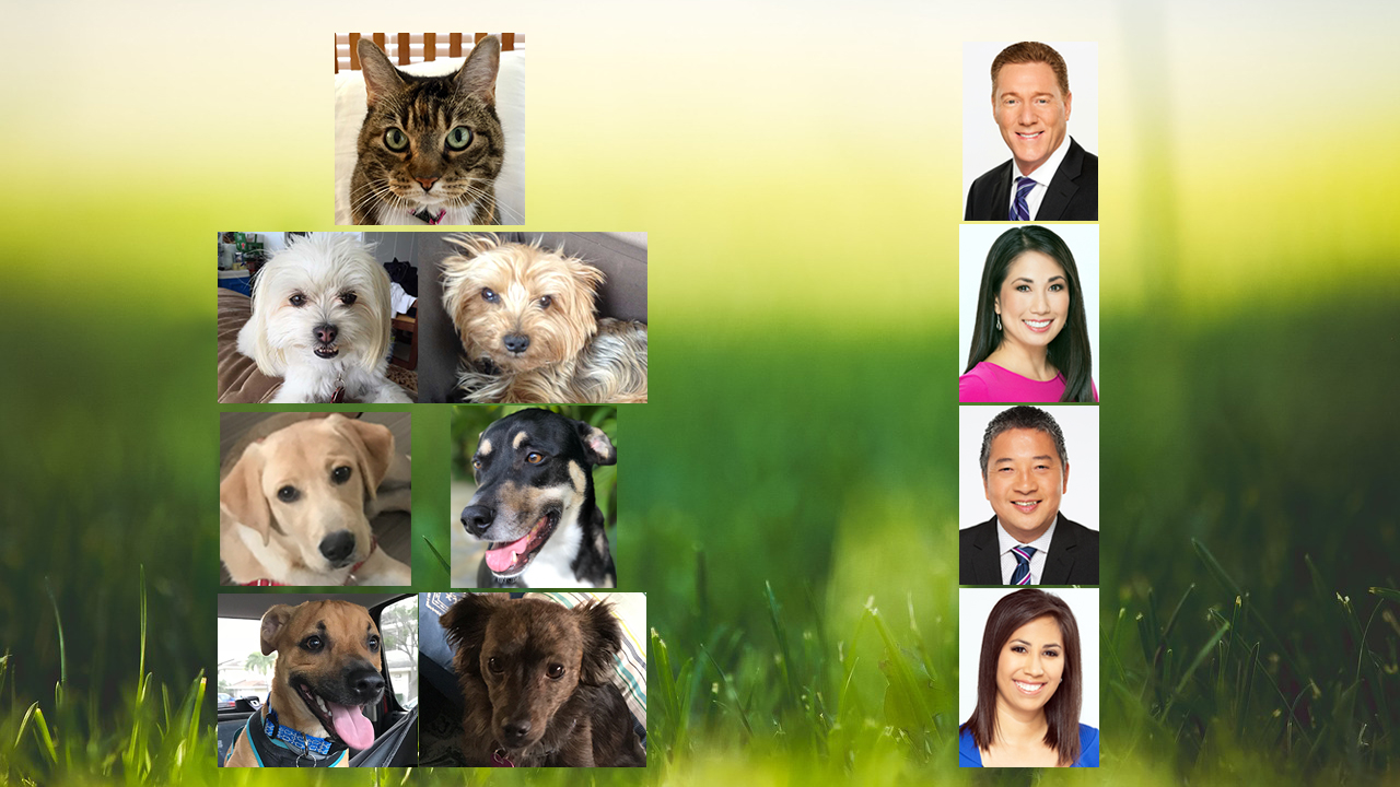 KHON2 pets and their people