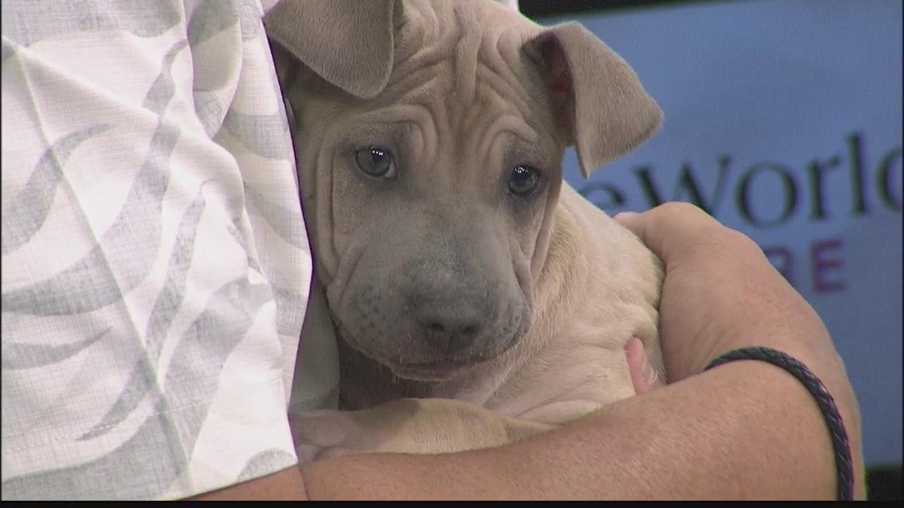 Hawaiian_Humane_Society_is_helping_pets__0_20180531032342