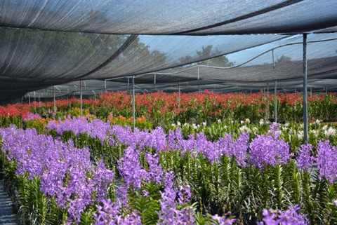 big island flower shortage