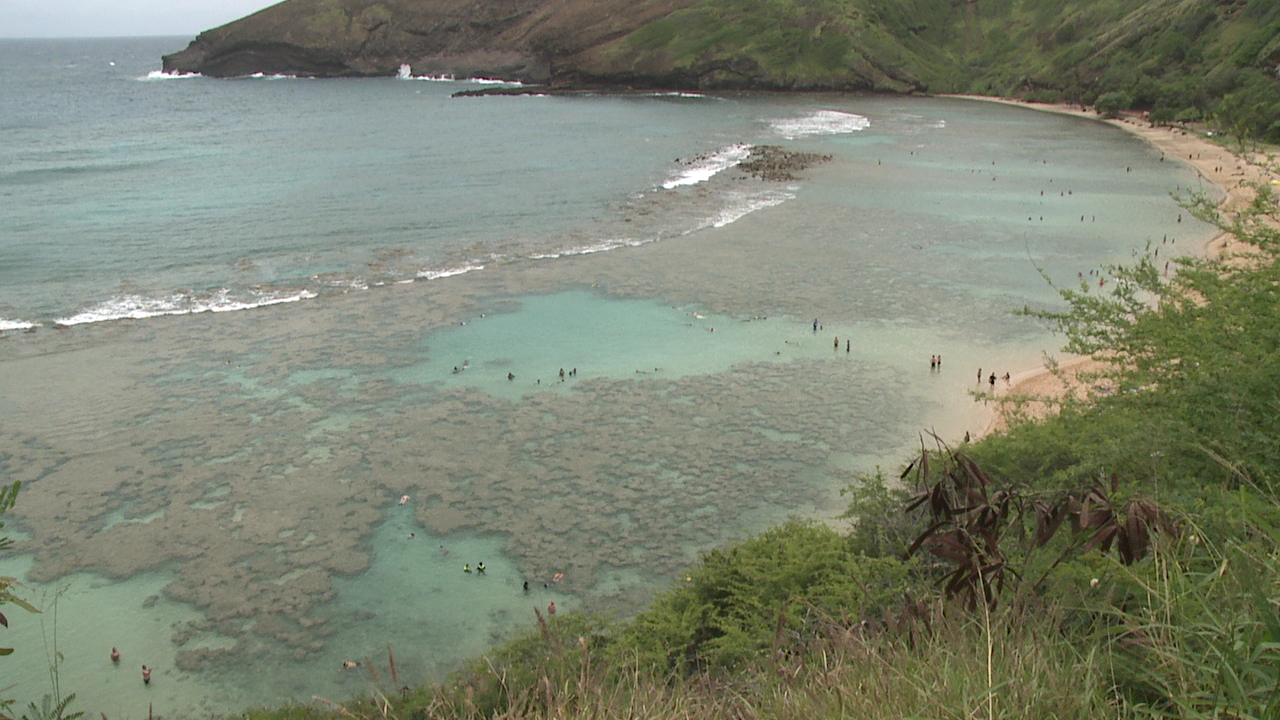 Hanauma Bay damaged by chemicals in sunscreen