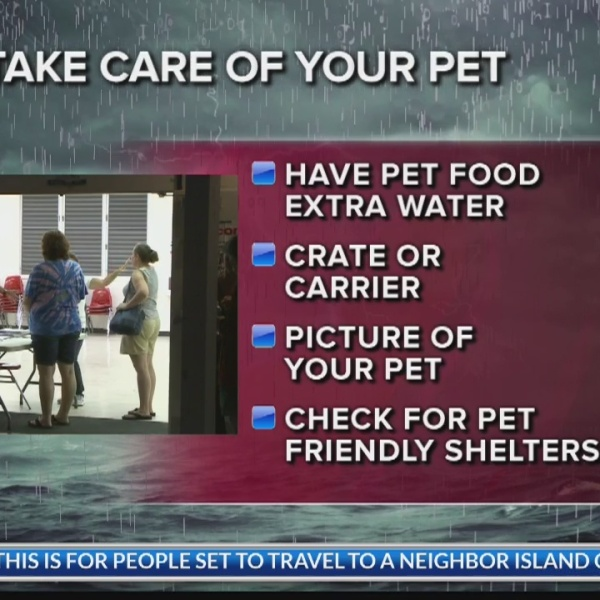 Taking care of your pet in the storm