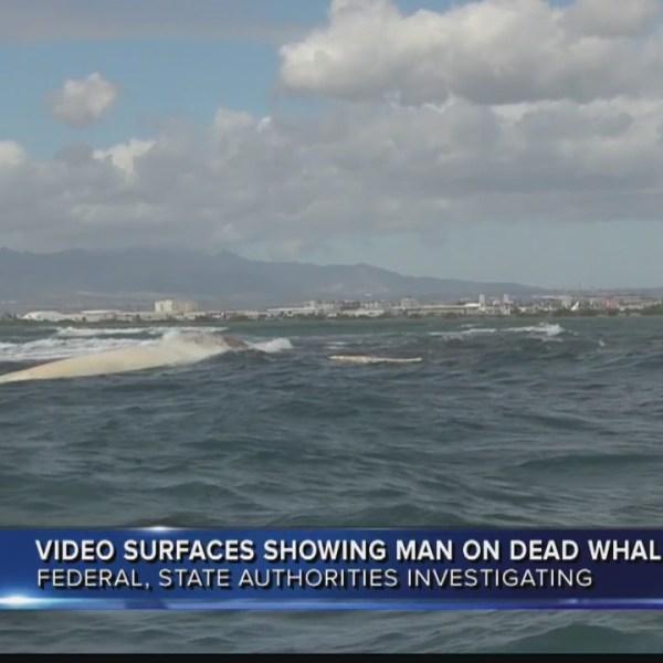 Man on whale carcass