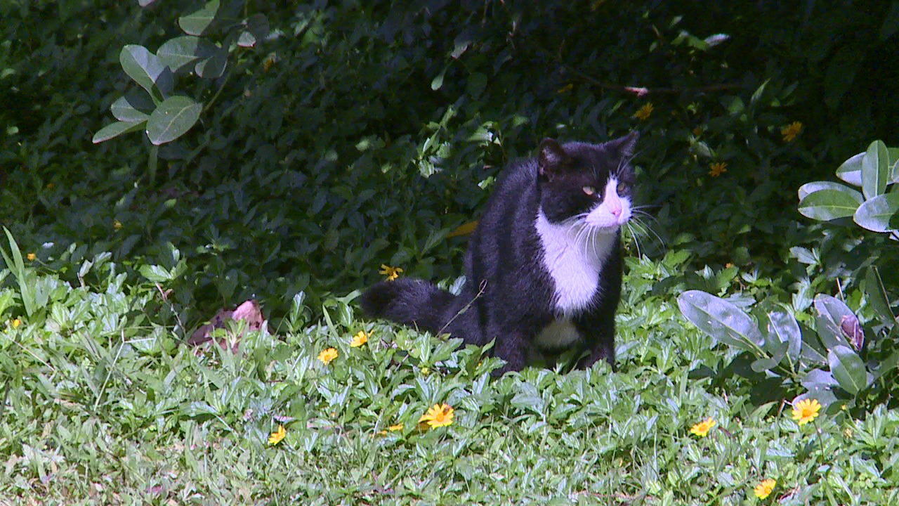 cats in cemetery_132373