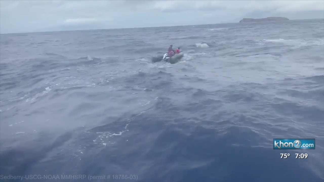 Entangled humpback whale freed of gear off Maui