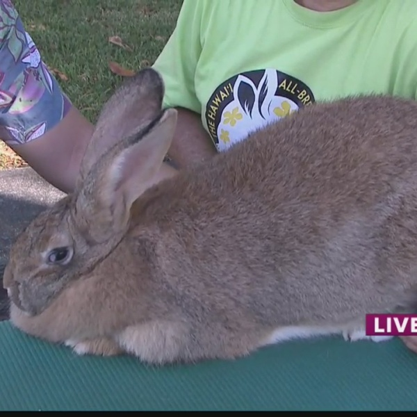 Take 2:How to care for an 'Easter Bunny'