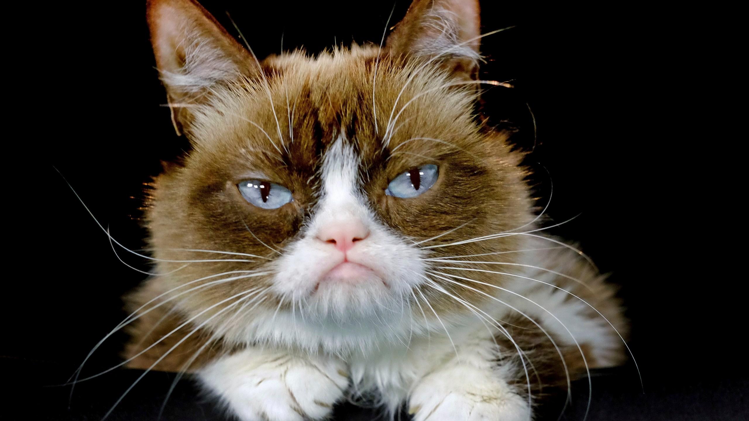 Grumpy Cat Death_1558120730678