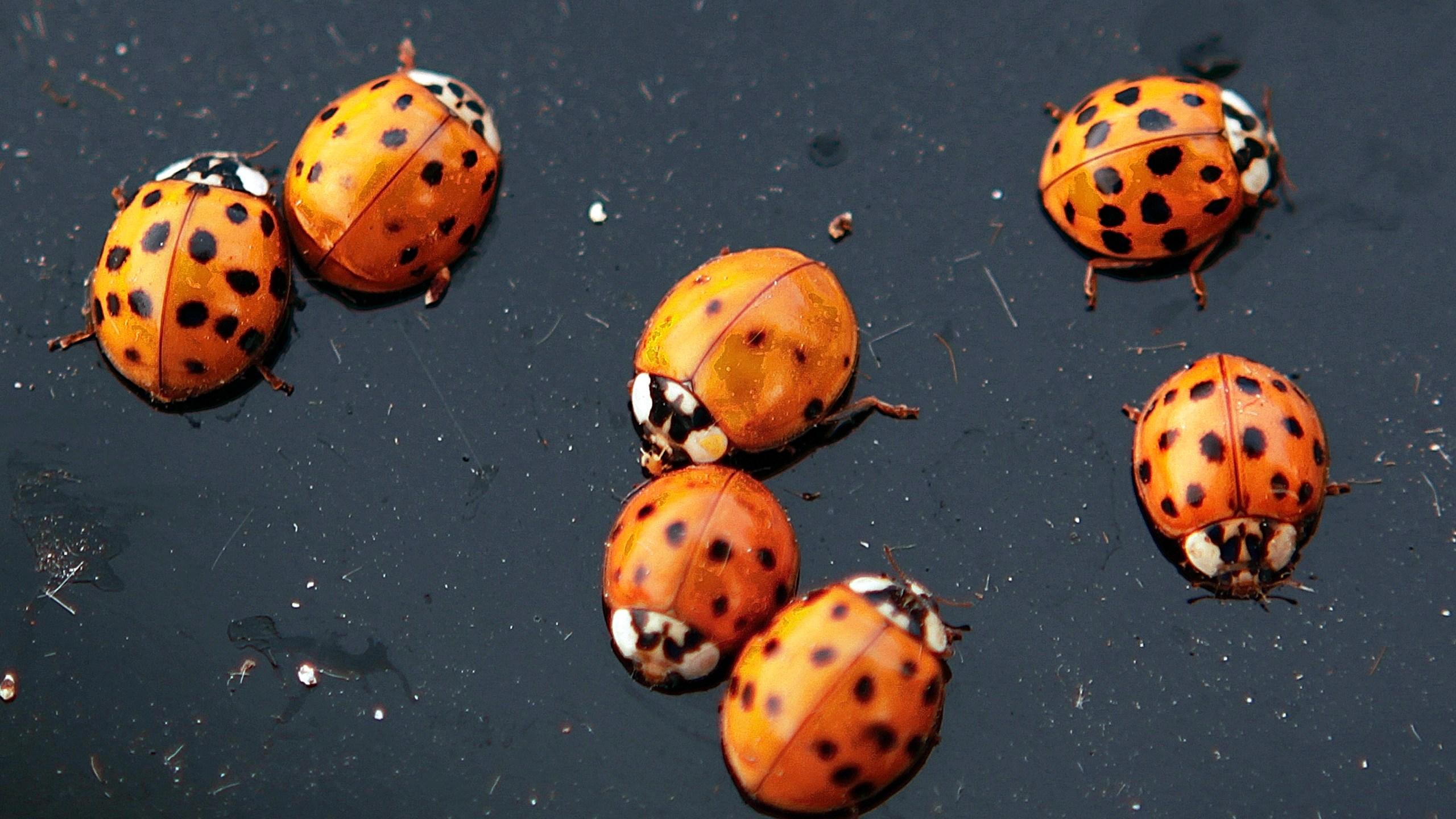 Ladybug Swarm_1559851914998