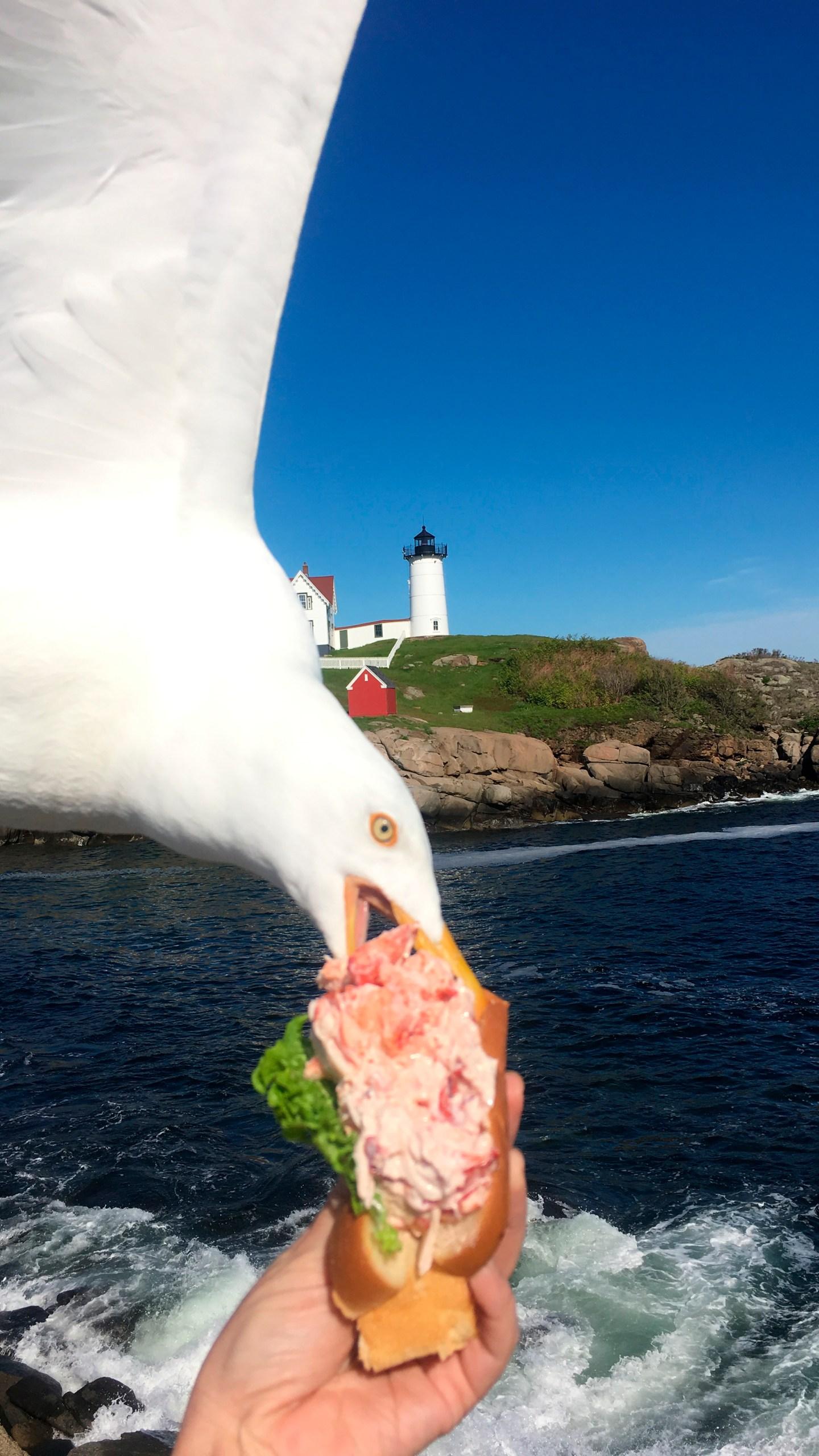 Seagull Photobomb_1560144155786