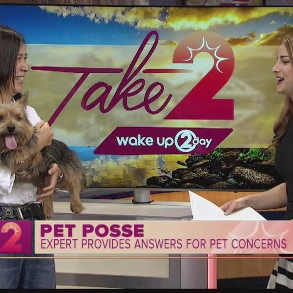 Pet Posse: Expert Answers Common Pet Concerns