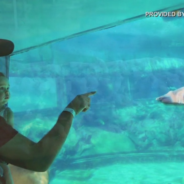 Sea Life Park celebrating Father's Day with free admission