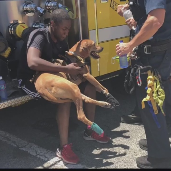 Service dog rescued by HFD after its paws are injured on hot East Oahu trail
