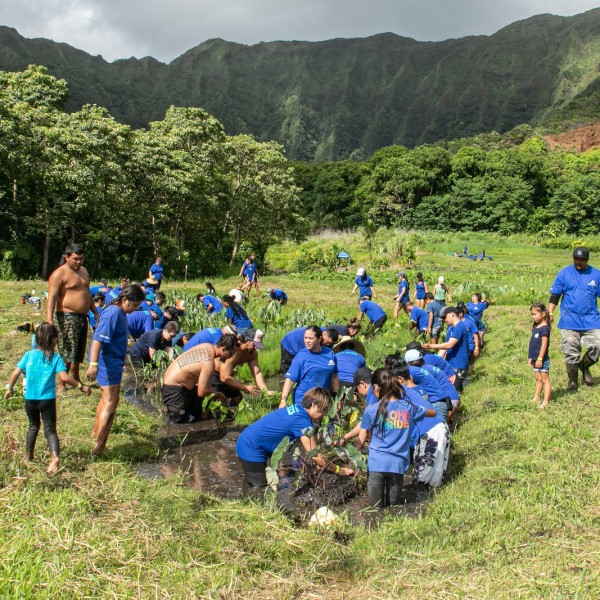Hawaii News & Weather | Honolulu, HI | KHON2