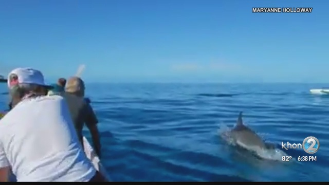 Canoe paddlers off Hawaii Island have close encounter with dolphins