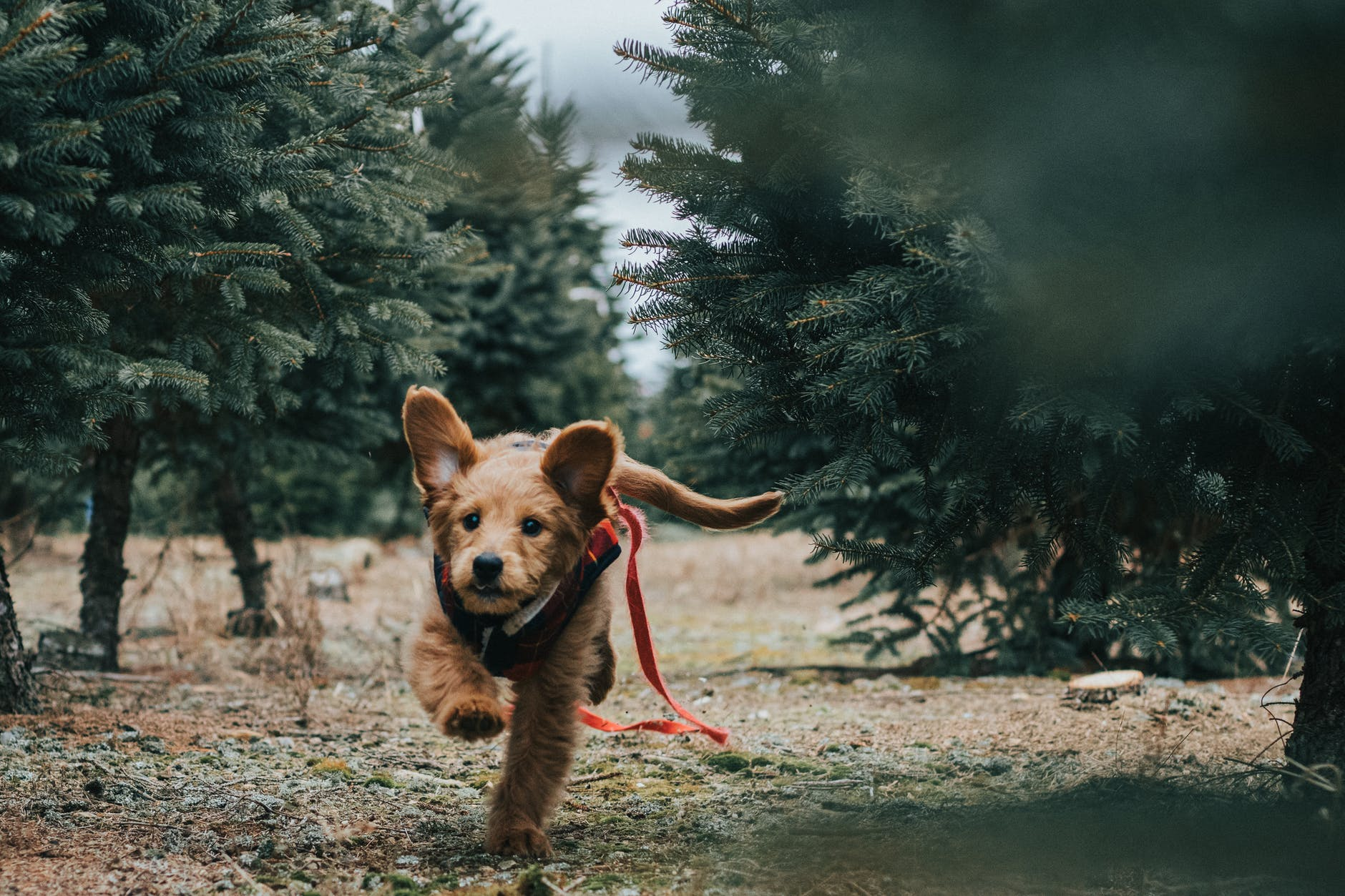 short coated brown dog near trees