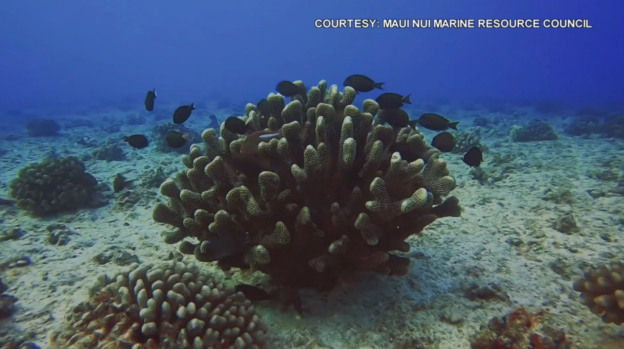 Protect Maui's Coral Reef